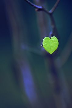 Navy Blue and Green in Nature - heart leaf I Love Heart, With All My Heart, Happy Heart, Love Is All, Lonely Heart, Tiny Heart, Heart In Nature, Heart Art, Real Nature