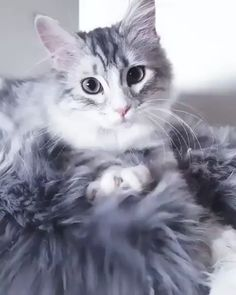 Cute Cats And Kittens, I Love Cats, Crazy Cats, Kittens Cutest, Animals And Pets, Baby Animals, Funny Animals, Cute Animals, Pretty Cats