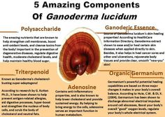 5 Amazing Components Of Ganoderma Lucidum. Benefits Of Ganoderma. Ganoderma Lucidum // Benefits Of Reishi Mushroom// Ganoderma Benefits // Coffee // Fungi // Weight Loss // Immune System // Fitness // How To Lose Weight Fungi, Coffee Health Benefits, Drinking Tea, Health Tips, Health Options, Herbalism, The Cure, Stuffed Mushrooms, Lose Weight