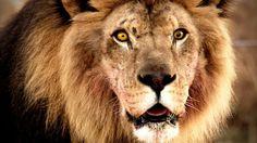 PETA Enlists Bob Barker To Urge CBS To Stop Using Wild Animals In 'Zoo'