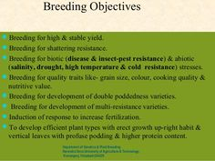 Breeding ObjectivesBreeding for high & stable yield.Breeding for shattering resistance.Breeding for biotic (disease & i...