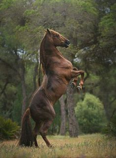 How Long Do Horses Live and Everything about Horse Age Pretty Horses, Beautiful Horses, Animals Beautiful, Cute Animals, Horse Photos, Horse Pictures, Animal Pictures, Majestic Horse, Majestic Animals