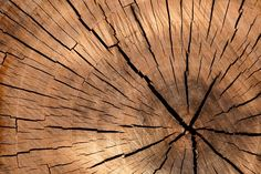 Tree Stump Wood Placemat Woven Tactile Texture Hemmed Edges By Everythingmats Big, Sturdy, Flexible Tree Logs, Wood Tree, Trees, Tree Tree, Into The Woods, Tactile Texture, Wood Texture, Patterns In Nature, Textures Patterns