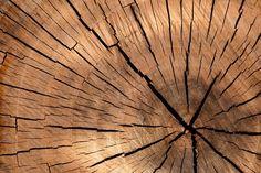 Wood / Bois - Pixabay