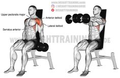 Seated dumbbell front raise. An isolation exercise. Target muscle: Anterior Deltoid. Synergists: Lateral Deltoid, Upper Pectoralis Major, Serratus Anterior, and Middle and Lower Trapezius.