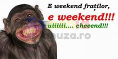 E weekend fratilor / Imagini funny cu maimute