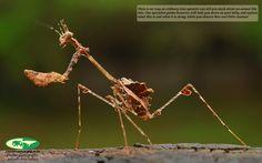insect - Nick van de WIel