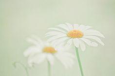 Green Dreams | Flickr - Photo Sharing!