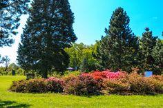 Czech Republic, Golf Courses, Park, Plants, Parks, Planters, Bohemia, Plant, Planting