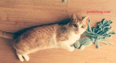 Juguetes Gatos Caseros con Calcetines DIY
