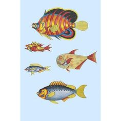 """Buyenlarge 'Rarest Curiosities of The Fish of The Indies' by Louis Renard Graphic Art Size: 42"""" H x 28"""" W x 1.5"""" D"""