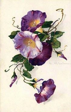 Morning glory for mom Vintage Flowers, Vintage Floral, Watercolor Flowers, Watercolor Paintings, China Painting, Botanical Prints, Flower Art, Beautiful Flowers, Beautiful Pictures