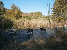 A caballo por el río Turia