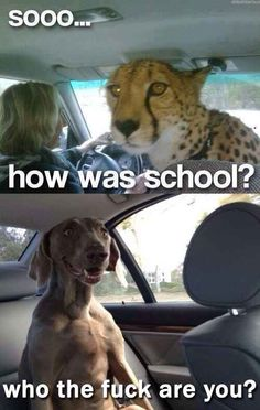 The car pool: | 28 Pictures That Will Make You Laugh Every Time #compartirvideos #funnypictures #watsappss