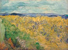 Vincent van Gogh - Feld, mit Kornblumen