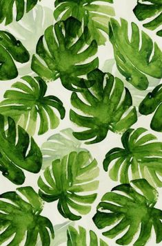 Image about cute in Green🌿 by kateb709 on We Heart It Wallpaper Free, Pop Art Wallpaper, Plant Wallpaper, Summer Wallpaper, Pattern Wallpaper, Wallpaper Backgrounds, Tropical Wallpaper, Trendy Wallpaper, Iphone Wallpaper