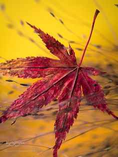 Leaf in autmn by edithnero on 500px