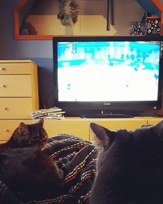 . . . #viiruthecat #niccythecat #cats #instacat #catsofinstagram #lazysunday #icehockey #olympics2018