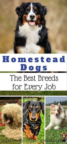 Homestead Dogs - the