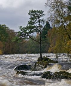 Scots Pine tree sits on a small rock in the middle of water falls