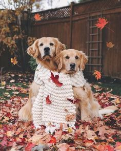 Fall is here and we are here for it just like ! Fall is here and we are here for it just like ! Dog Pictures, Animal Pictures, Cute Puppies, Cute Dogs, Cute Dog Wallpaper, Pet Home, Dog Photography, Dog Accessories, Dog Mom