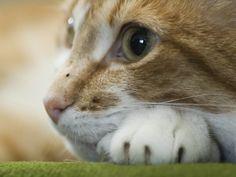 Keywords Cat Cats Animal Animals Pet Pets Wallpaper
