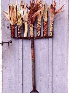 Ears of corn spruce up an old garden rake. More fall decorating ideas: http://www.midwestliving.com/homes/seasonal-decorating/easy-fall-decorating-projects/