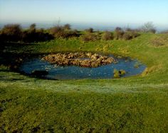 Dew pond - west of Chanctonbury Ring  Puck of Pook's Hill
