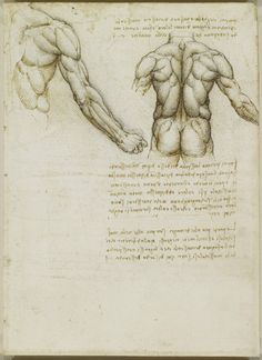 Download the Sublime Anatomy Drawings of Leonardo da Vinci: Available Online, or in a Great iPad App