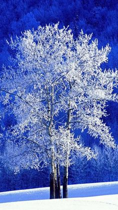 Winter, Snow. Maybe a good idea for my moms frame in the living room - I Love to see snow and ice on trees.  I'm from Kansas, transplanted to Florida, and though I don't miss the ice, I miss seeing it out my front window!! ;)