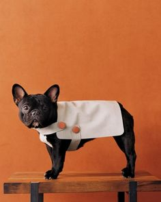 Doggy Coat - featured by Homeward Pet as part of Be-Kind-To-Animals Week. http://www.homewardpet.org/kids/KraftsWeek.html