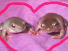 Frog Pictures, Frog Art, Cute Frogs, Frog And Toad, Oui Oui, Cute Little Animals, Wholesome Memes, Mood Pics, Reaction Pictures