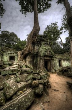 Staff Tree taking over ruins of building inside Ta Prohm temple complex, Angkor Wat, Cambodia.Tree taking over ruins of building inside Ta Prohm temple complex, Angkor Wat, Cambodia. Beautiful World, Beautiful Places, Timor Oriental, Angkor Wat Cambodia, Dame Nature, Puerto Princesa, Temple Ruins, Ancient Ruins, Mayan Ruins