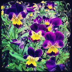 Mobile photo retouching Mobile Photos, Photo Retouching, Day, Flowers, Plants, Florals, Planters, Flower, Blossoms