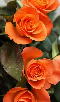 GOOD NIGHT FRIENDS WITH PRETTY FLOWERS - Sulakshna Badlani - Google+