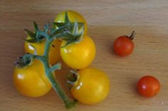 Galina tomatoes large yellow cherry tomatoes Variety Of Fruits, Self Sufficient, Cherry Tomatoes, Fruits And Vegetables, Potatoes, Vines, Fruits And Veggies, Potato, Vitis Vinifera