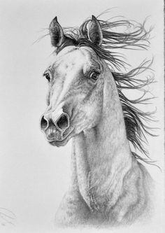 My new year resolution is to draw more! So starting now I hope 2017 will be a year with more drawings and improvement. First out is my own little horsie. Bass Fishing Shirts, Water Animals, Horse Drawings, Pencil Art, Black And White Photography, Equestrian, Sketches, Horses, Deviantart
