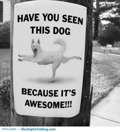 Have You Seen This Dog? http://shutupimtalking.com/have-you-seen-this-dog/