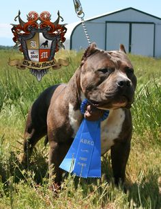 #Homie the american bully wins...  He deserves another award for best dog name.  My next dog will most certainly be named #Homie!! love it lol