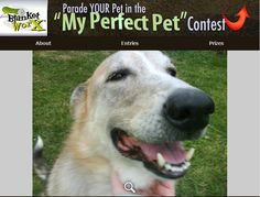 Lucky (aka:Luck Luck H) is smiling for the camera on a beautiful summer day!    Share your pet's photo for a chance to win a chance to win one of 7 beautiful photo gifts!  Submit their photo herehttp://www.myperfectpetcontest.com  and for more great ways to showcase your photo memories visit BlanketWorx