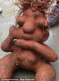 Homer really IS a vegetable! Root dug up in China looks just like Simpson