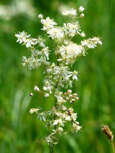 Die Kräuterheilkunde: Heilpflanzen, Heilkräuter und ihre Wirkung gegen verschiedene Beschwerden