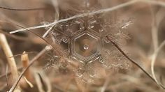 Macro image of a snow flake. By Russian photographer Andrew Osokin