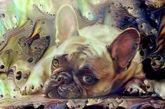 French Bulldog Puppy by Peggy Collins Art Print and Home Decor for sale. A cute Frenchie painting with a little abstract art. Click on the link or the image to buy a poster, framed fine art print, wrapped canvas, metal or acrylic print or home decor products. 30 day money back guarantee on every purchase.  (c) Peggy Collins peggycollinsgallery.com - Art for your Home Decor and Interior Design needs.