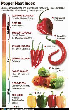 It's 200 times hotter than the jalapeño. And spicy-food lovers can't wait to get their hands on it. It's the bhut jolokia chili pepper from India, and it's recently been declared the hottest in the world. Chile Picante, Herbalife Shake Recipes, Bhut Jolokia, Coconut Oil Weight Loss, Healthy Snacks, Healthy Recipes, Healthy Habits, Ghost Peppers, Gastronomia