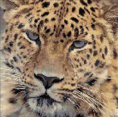 Leopard cross stitch pattern, free from cross-stitch-pattern.net
