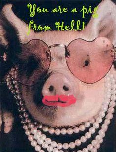 Steel Magnolias Pet Pigs, Baby Pigs, This Little Piggy, Little Pigs, Baby Animals, Funny Animals, Cute Animals, Teacup Pigs, Mini Pigs