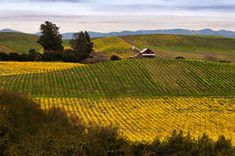 If you're a gourmand, Napa is a dream come true. Oodles of specialty food stores, wineries, farms, and culinary institutes are here to pique your senses. There's a farmers' market almost every day of the week. Food and wine pairings are endless. And to top it all off, you have your choice of some of the world's best restaurants, run by some of the world's best chefs. So loosen your belt—we're going on a culinary tour of Napa Valley.&n...