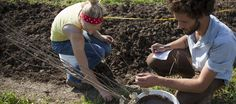 Eating up the landscape: Permaculture proves a yard can wield more than grass