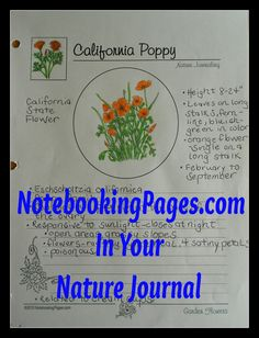 Keeping a nature journal using notebooking pages has been a part of our routine for many years. Each page is a treasure, showing some as. Homeschool Coop, Homeschool High School, Montessori Homeschool, Elementary Science, Teaching Science, Study Board, Nature Study, Nature Journal, Home Schooling
